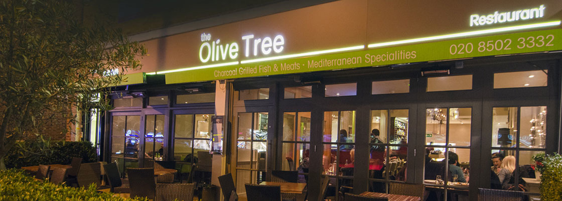 The Olive Tree Profile Pic