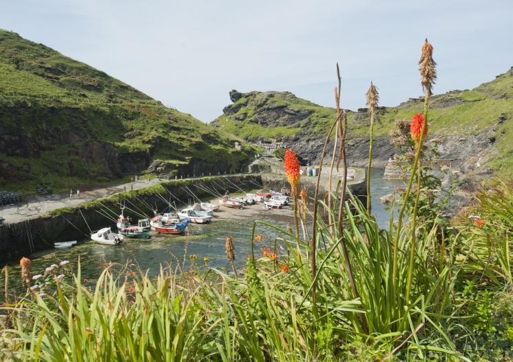 Boscastle Harbour Profile Pic